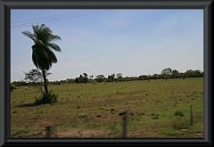In den Llanos gibt es auch riesige, aber karge Weiden - mit relativ wenigen Tieren