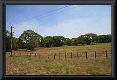 Oft findet man Bäume mit weit ausladenden Kronen: der Regenbaum (Samanea saman)