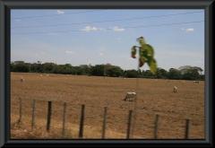 Eine weitere für die Llanos typische Weide