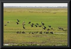 Viele Vögel sind auf Hato el Cedral zuhause