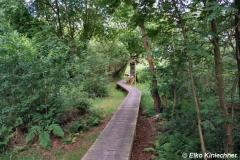 Steg über das Steinhuder Moor