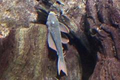 leipzig-zoo-fische-08