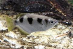 leipzig-zoo-fische-14