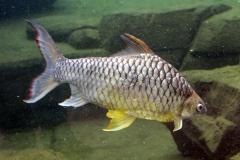 leipzig-zoo-fische-19