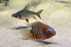 leipzig-zoo-fische-25
