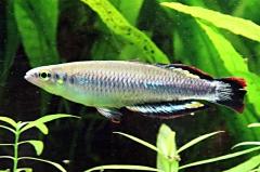 leipzig-zoo-fische-37