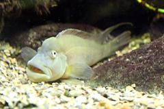 leipzig-zoo-fische-39