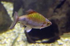 leipzig-zoo-fische-45