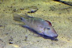 leipzig-zoo-fische-48