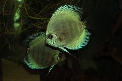 leipzig-zoo-fische-54