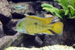 leipzig-zoo-fische-57