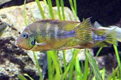 leipzig-zoo-fische-58
