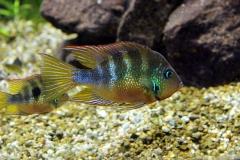 leipzig-zoo-fische-60