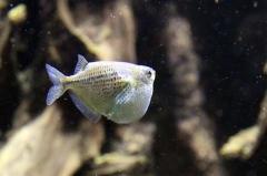 leipzig-zoo-fische-61