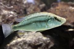 leipzig-zoo-fische-65