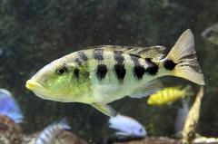 leipzig-zoo-fische-66