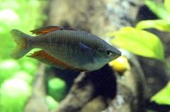 leipzig-zoo-fische-68