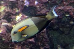 leipzig-zoo-fische-72