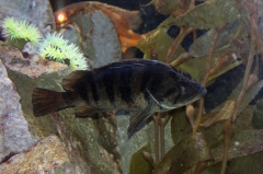 leipzig-zoo-fische-82