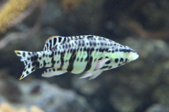 leipzig-zoo-fische-87