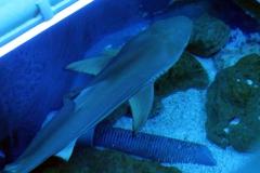 leipzig-zoo-ringaquarium-04