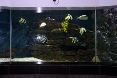 leipzig-zoo-ringaquarium-07