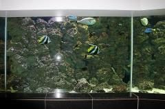leipzig-zoo-ringaquarium-09