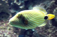 leipzig-zoo-ringaquarium-10