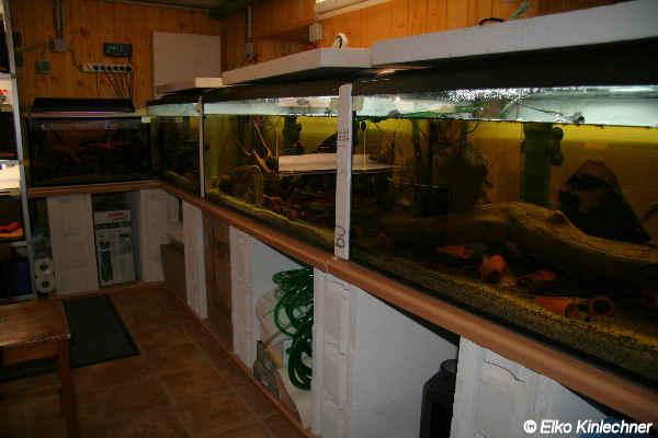 Aquarienkeller