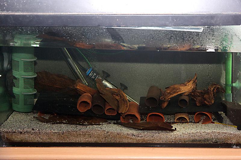 Aquarium für Spectracanthicus murinus