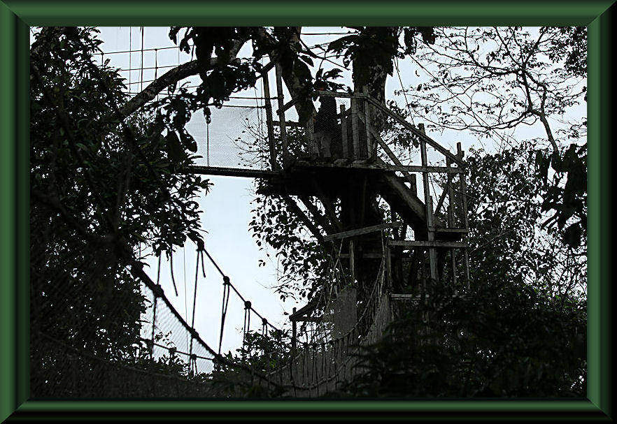 Canopy Walkway am Río Napo