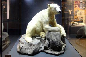 Knut, der beliebte Berliner Eisbär