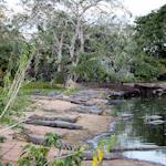 pantanal-2013-150