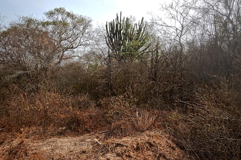 Kaa-Iya del Gran Chaco